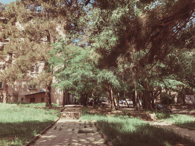 I banchi di legno e gli alberi del fiore nella città parcheggiano vicino a bilding Primavera nella città fotografia stock