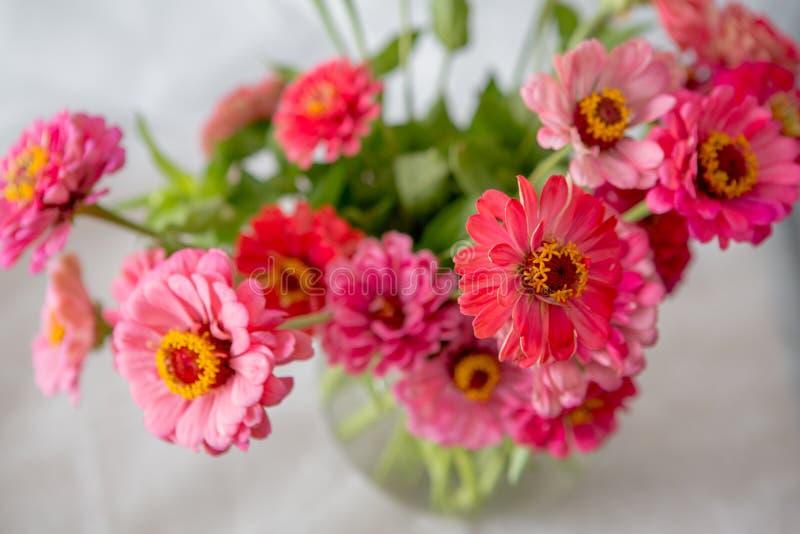 I bei e fiori delicati dell'estate hanno chiamato Gerberas su un fondo bianco fotografia stock