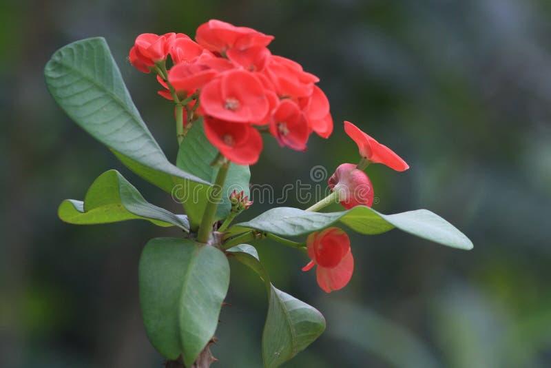 I bei fiori gradiscono una bella vita fotografie stock