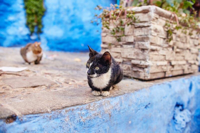 I bei gatti smarriti dormono e camminano nelle vie del Marocco B immagini stock libere da diritti