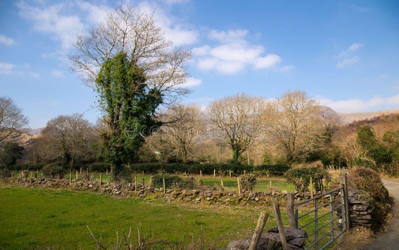 I bei Irlandesi rurali abbelliscono con la parete di pietra e l'erba verde Paesaggio di Moundain con i fabbricati agricoli immagini stock libere da diritti