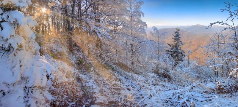 I bei raggi di sole nella foresta nevosa dell'inverno con il sole stupefacente irradia immagini stock