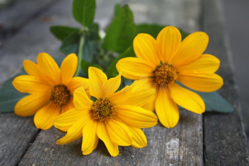 I bei tre fiori freschi gialli delicati si trovano sulla tavola fotografie stock