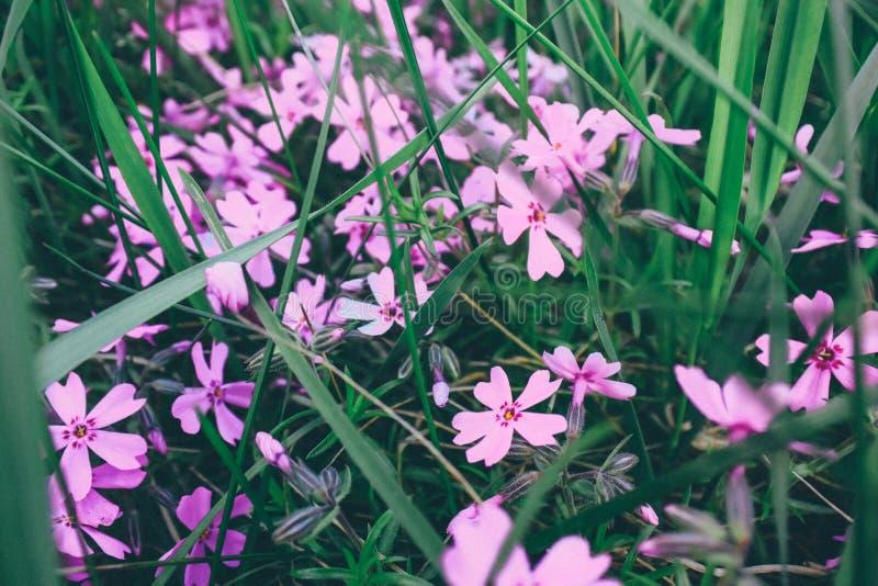 I blommaträdgården arkivfoto
