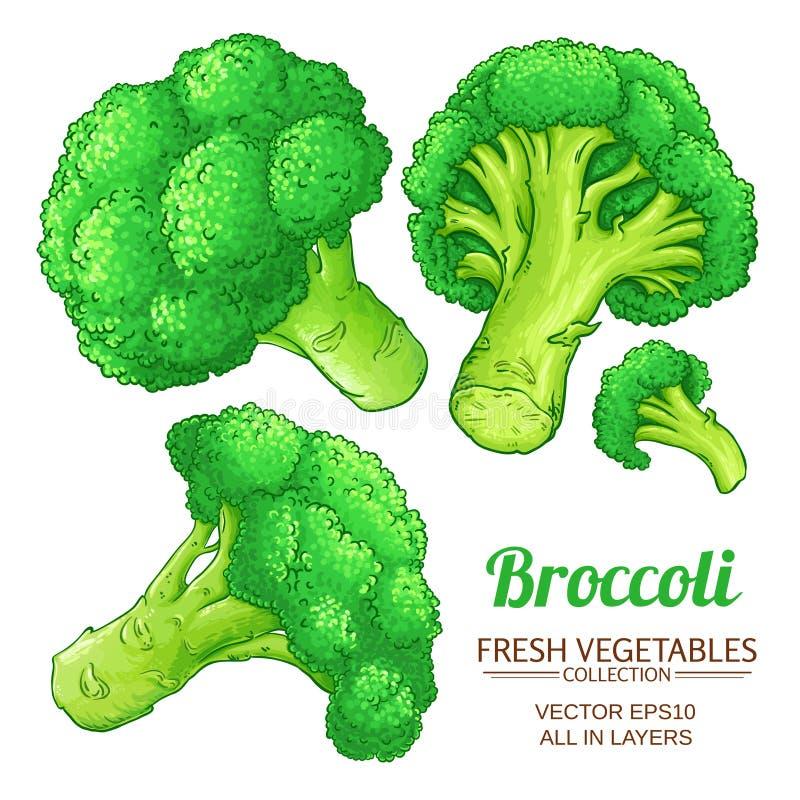 I broccoli vector isolato illustrazione di stock