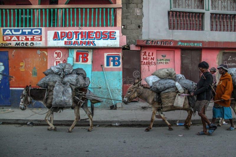 I Burros portano le merci sulle vie del cappuccio Haitien, Haiti immagini stock