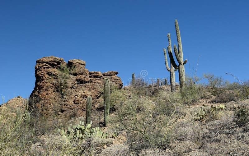 I cactus del saguaro e le formazioni rocciose in Arizona Sonoran abbandonano fotografia stock libera da diritti