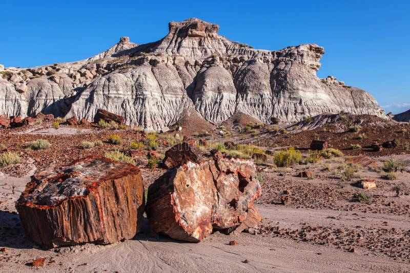 I calanchi dipinti del deserto hanno petrificato la foresta immagini stock