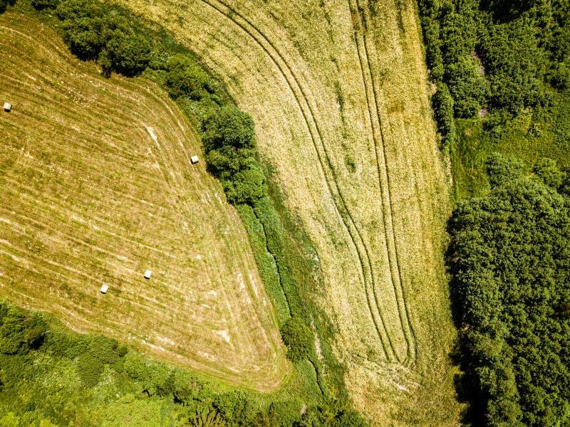 i campi coltivati dell'agricoltura da sopra gli uccelli osservano di estate fotografia stock libera da diritti
