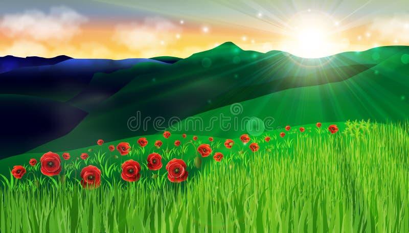 I campi di erba verde dei fiori di rosso del papavero che stupiscono il tramonto abbelliscono il fondo di pace di armonia illustrazione vettoriale