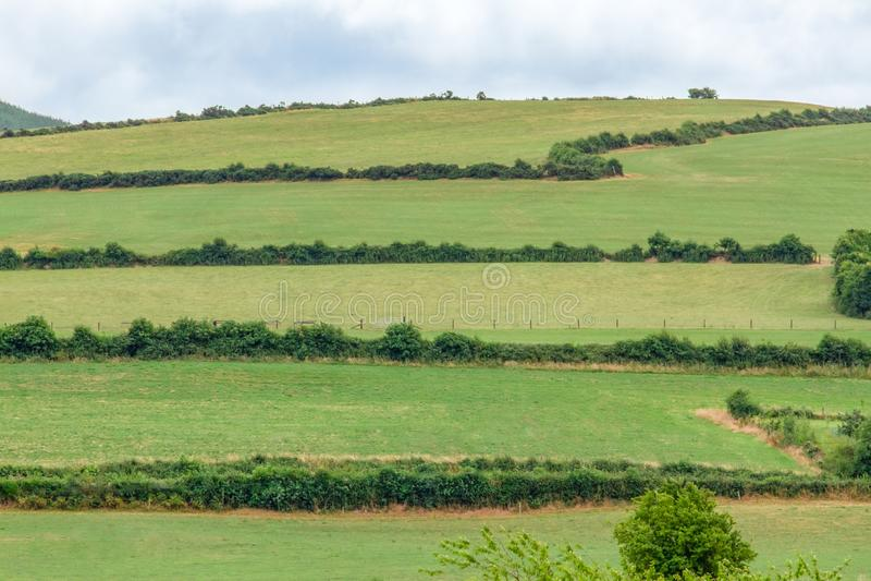 I campi verdi di Moneygall, contea Offaly, Irlanda fotografia stock libera da diritti