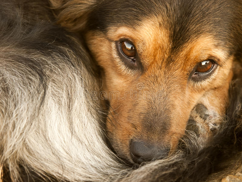 Download I Can See You stock image. Image of watchful, canine - 14972481