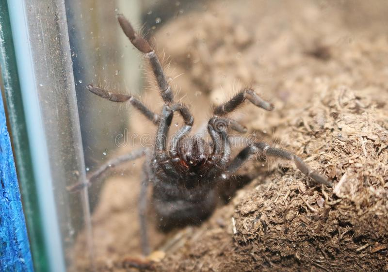 I can`t remember what kind of spider this is royalty free stock photo
