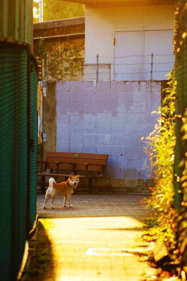 I cani girano intorno fotografia stock libera da diritti