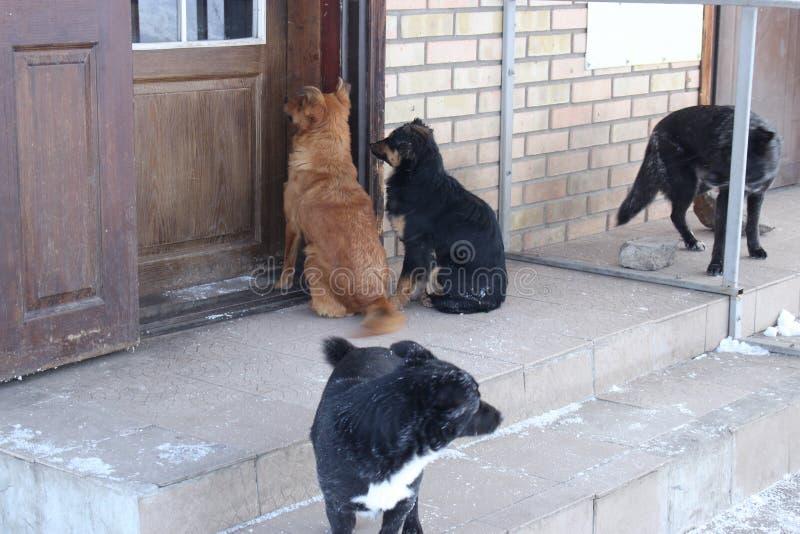 I cani randagi stanno aspettando vicino all'uscita del negozio fotografia stock libera da diritti