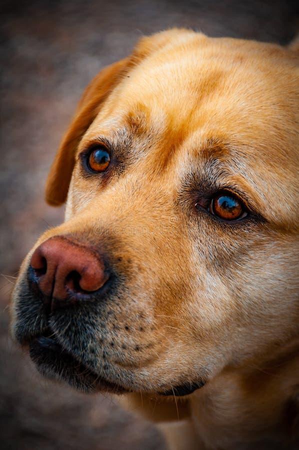 I cani sono tali creature di genere e belle fotografia stock libera da diritti