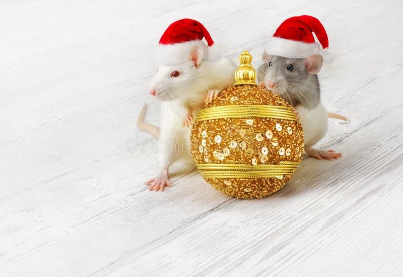 I cappelli con la palla d'oro natalizia, gli animali del nuovo anno nei cappelli rossi di Natale immagini stock libere da diritti