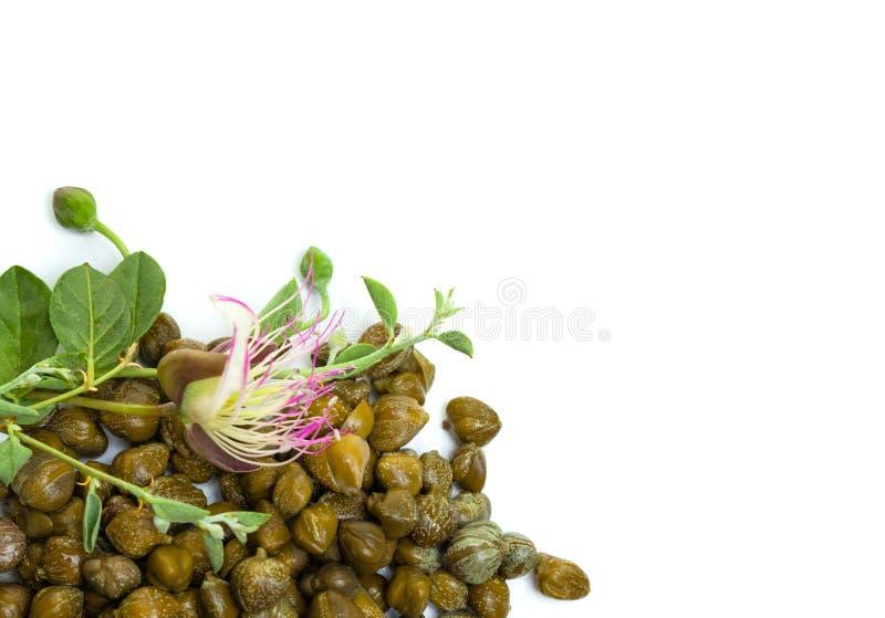 I capperi con il cappero fioriscono su bianco, fondo dell'alimento biologico immagini stock libere da diritti