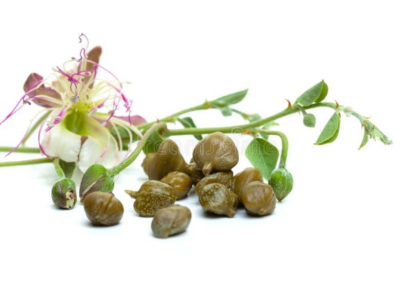 I capperi, le foglie verdi ed il cappero fioriscono su bianco fotografie stock