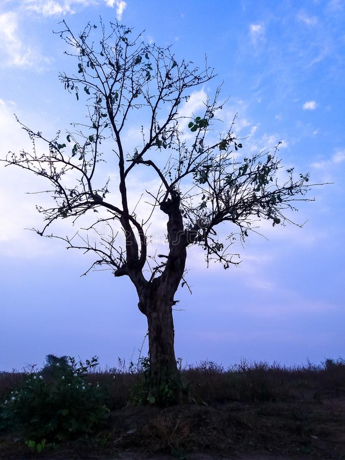Beautiful tree and blue sky royalty free stock photography