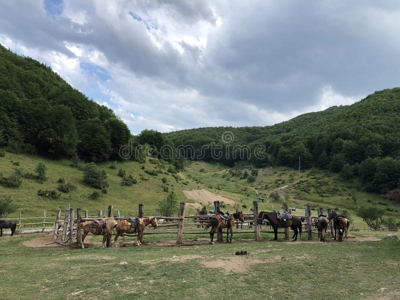 I cavalli aspettano per il giro del cavallo della montagna fotografie stock