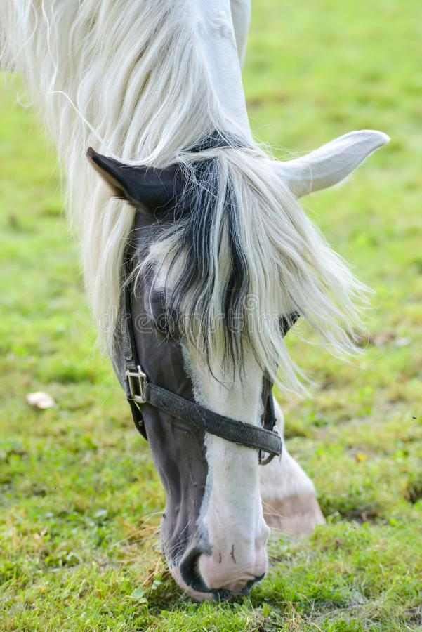 I cavalli del circo di carnevale vagano nel giardino fotografia stock libera da diritti