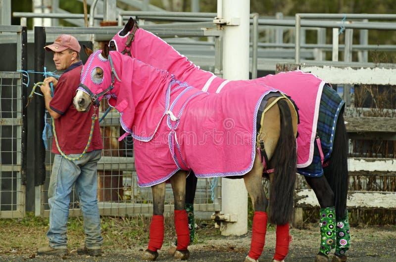 I cavalli di salto di manifestazione di dressage si sono vestiti in cappotti con l'istruttore immagini stock
