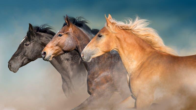 I cavalli radunano il ritratto nel moto fotografia stock