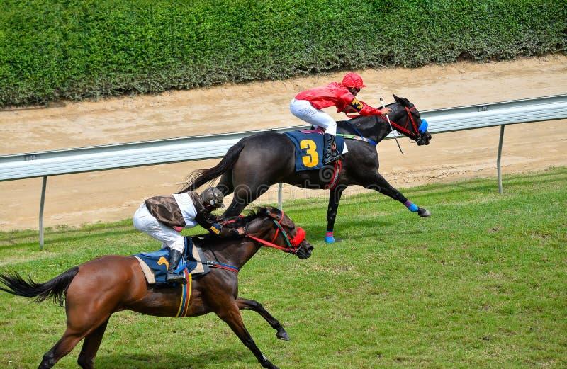 I cavalli stanno correndo ed accelerando immagini stock