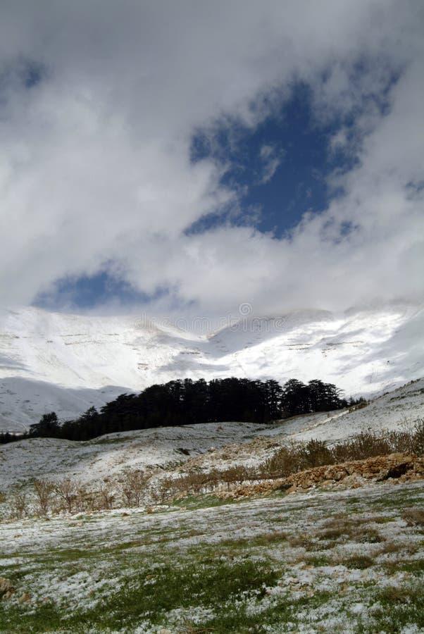 I cedri famosi della riserva di Libano sui pendii di Qurnat come Sawda nel Libano immagini stock