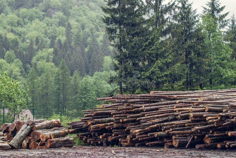 I ceppi abbattuti del pino hanno accatastato il tagliafuoco immagini stock