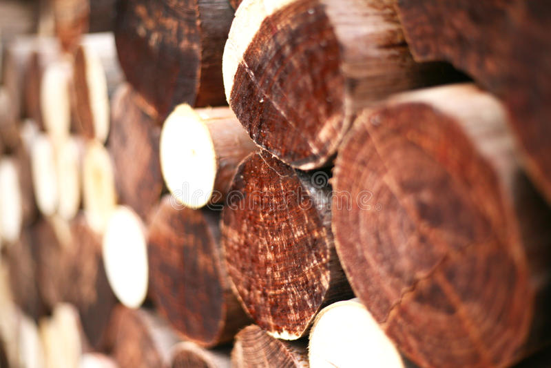 I ceppi del legname dell'inverno hanno accatastato il livello immagini stock libere da diritti
