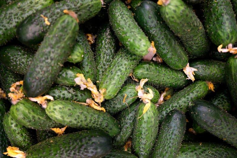 I cetrioli verde-cupo deliziosi sembrano saporiti immagine stock libera da diritti