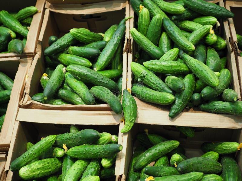 I cetrioli verde intenso sono in scatole di cartone ecologiche nel supermercato fotografia stock