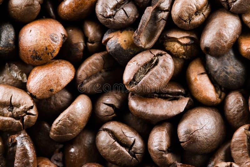I chicchi di caffè immagine stock