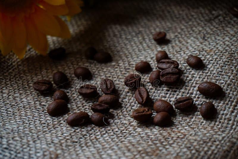 I chicchi di caffè si sono sparsi sul tessuto della tela da imballaggio fotografia stock