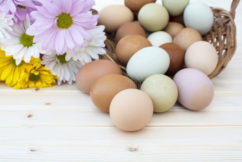 I chickeneggs organici freschi traboccano dal canestro con chrysanthe fotografia stock