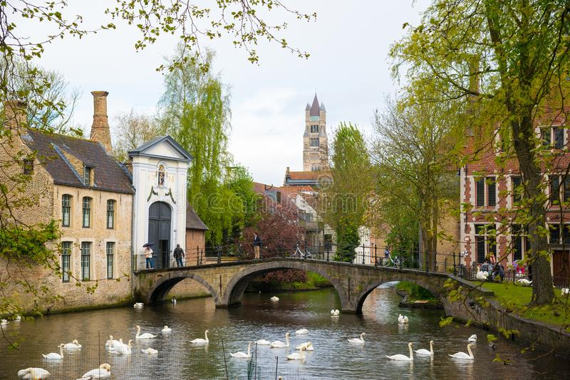 I cigni in lago di amore a Bruges, incanalano la vista panoramica vicino a Begijnhof fotografia stock libera da diritti