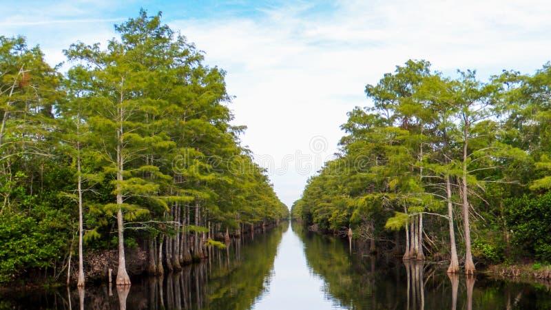 I cipressi allineano le sponde di un canale in una parte delle Everglades originali della Florida immagine stock