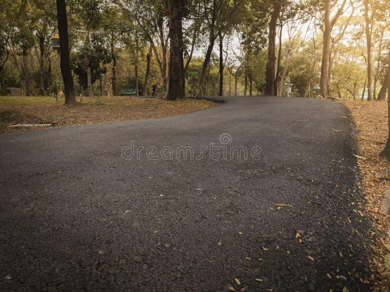 I cloes drammatici sul modo del percorso di asfalto nel parco pubblico di autunno di caduta con luce calda per fondo, si rilassan immagine stock libera da diritti