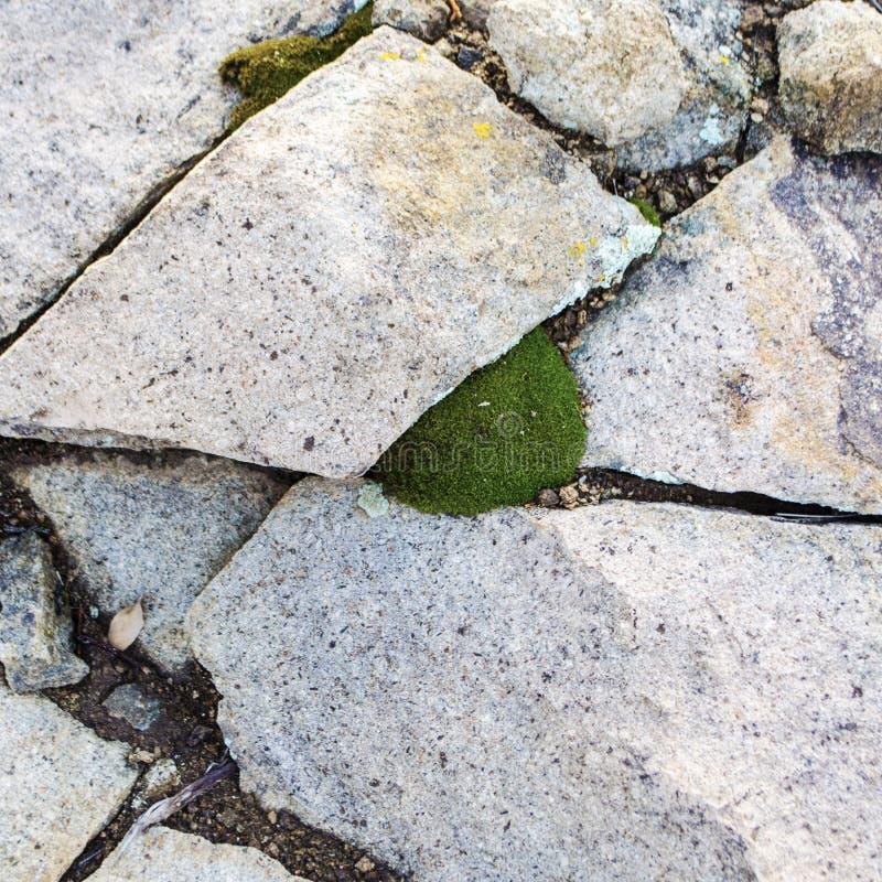 I cocci bianchi della roccia del tufo fanno una progettazione intorno ad una piccola bolla di muschio verde immagine stock libera da diritti