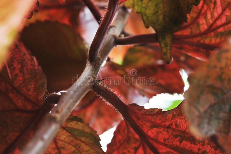 I colori autunnali cadono pianta e foglie fotografie stock libere da diritti