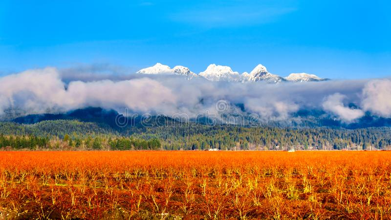 I colori dell'inverno del mirtillo sistema in Pitt Polder vicino all'acero Ridge in Fraser Valley della Columbia Britannica, Cana fotografia stock