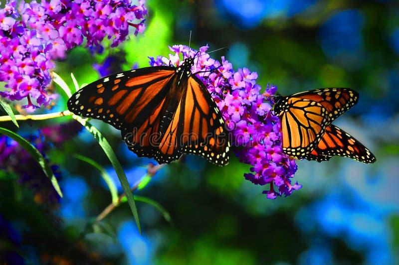 I colori della natura fotografia stock