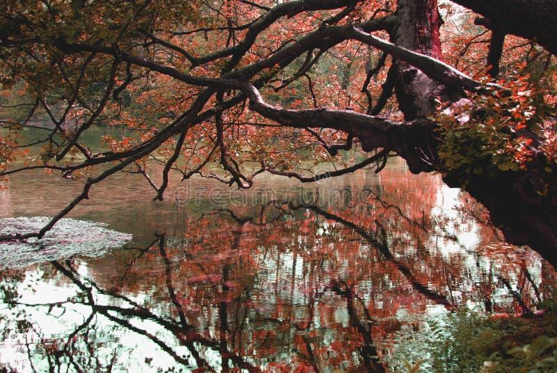 I colori della natura fotografie stock