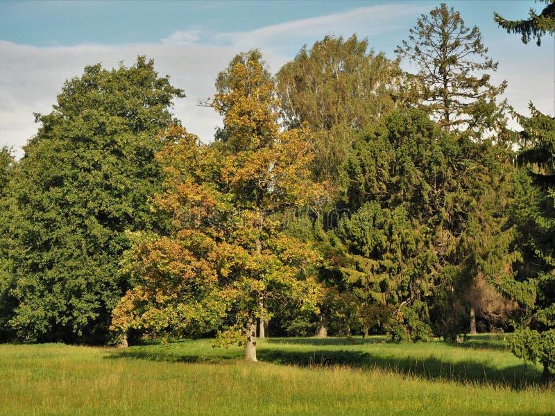 I colori di autunno in Kadriorg parcheggiano, Tallinn, Estonia fotografia stock libera da diritti