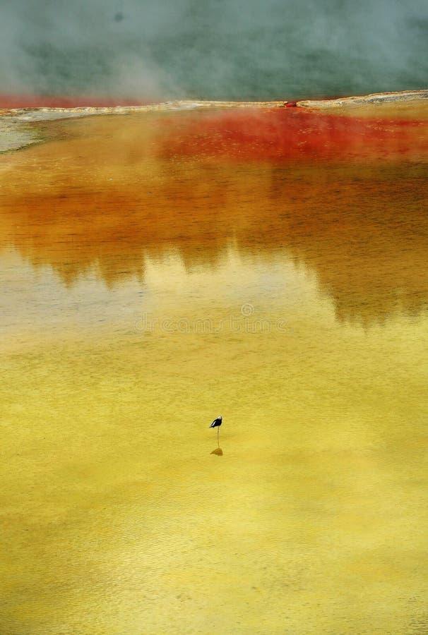 I colori di Wai-O-Tapu fotografie stock libere da diritti