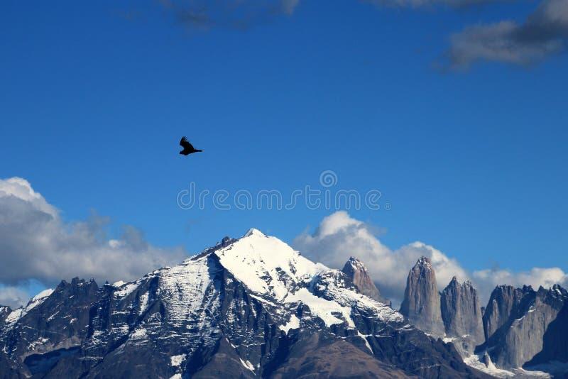 I condor andini volano in Parque Nacional Torres del Paine, Cile fotografia stock
