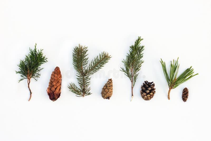 I coni dei rami degli aghi attillano il ginepro del pino su un fondo bianco fotografie stock