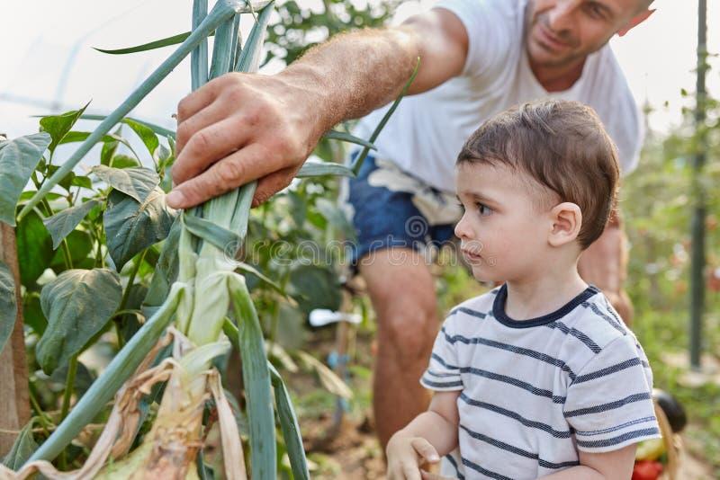 I contadini di papà e figlio fotografia stock